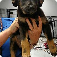 Adopt A Pet :: Cher - Groton, MA
