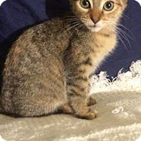 Adopt A Pet :: Curly Sue - Ashland, KY
