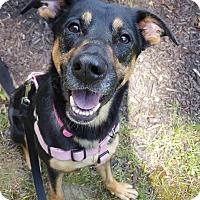 Adopt A Pet :: Jasmine - Fennville, MI