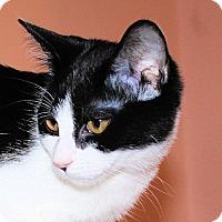 Adopt A Pet :: Mindy - Morganton, NC