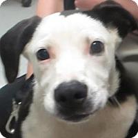 Adopt A Pet :: Todd - Lincolnton, NC