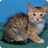 Adopt A Pet :: Hermione - Lenexa, KS