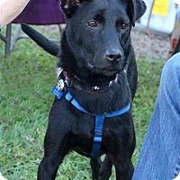 Adopt A Pet :: Zena - Bedford, VA