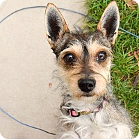 Adopt A Pet :: Toto - Meridian, ID