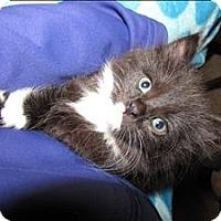 Adopt A Pet :: Lilo K2 Aka Pillowcase - Sherwood, OR
