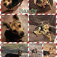 Adopt A Pet :: Randy - Ravenna, TX