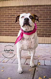 Boxer Mix Dog for adoption in Mooresville, North Carolina - Mya (Bonded Pair)