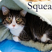 Adopt A Pet :: Squeak - Hamilton, MT