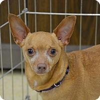 Adopt A Pet :: Colby - Ogden, UT