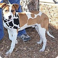 Adopt A Pet :: Milo - Hutchinson, KS