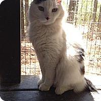 Adopt A Pet :: Bob - Monroe, GA