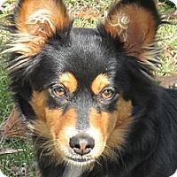 Adopt A Pet :: Candy - Brattleboro, VT