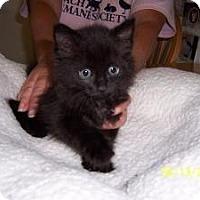 Adopt A Pet :: Nina - Island Park, NY