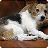 Adopt A Pet :: BUTCH - Scottsdale, AZ