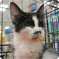 Adopt A Pet :: Groucho - The Colony, TX