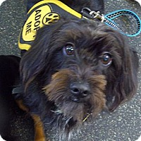 Adopt A Pet :: Kool-Aid - San Jose, CA