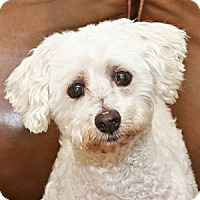 Adopt A Pet :: Marshmallow - La Costa, CA