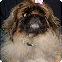 Adopt A Pet :: Lindsey - Mays Landing, NJ