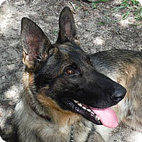 Adopt A Pet :: BYRON - SAN ANTONIO, TX