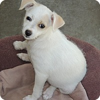 Adopt A Pet :: Pearl - La Habra Heights, CA