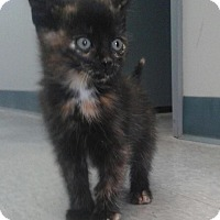 Adopt A Pet :: Danielle - Sunderland, ON