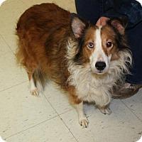 Adopt A Pet :: Gi Gi - Alderson, WV