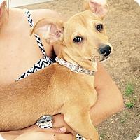 Adopt A Pet :: Brando (ARSG) - Santa Ana, CA