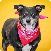 Adopt A Pet :: Layla - Lomita, CA