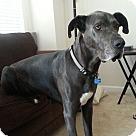 Adopt A Pet :: Bleu