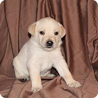 Adopt A Pet :: Spirit - BIRMINGHAM, AL