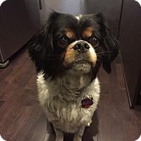 Adopt A Pet :: Rocky - Edmonton, AB