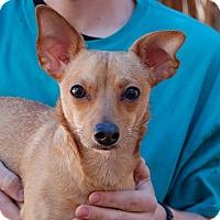 Adopt A Pet :: Watson - Las Vegas, NV