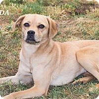 Adopt A Pet :: Jayda - Patterson, CA