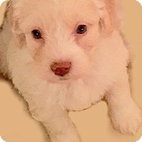 Adopt A Pet :: BEAUTY(OUR