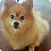 Adopt A Pet :: Ruger - Chesapeake, VA