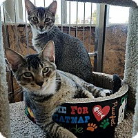Adopt A Pet :: Mookie and Meeko - Redwood City, CA