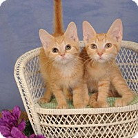 Adopt A Pet :: Monica (on right) - mishawaka, IN