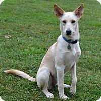Adopt A Pet :: Blanca - Huntsville, AL
