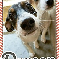 Adopt A Pet :: Duncan - Edwards AFB, CA