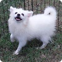 Adopt A Pet :: Layla Pending - Alpharetta, GA