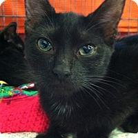 Adopt A Pet :: Peanut - Seminole, FL