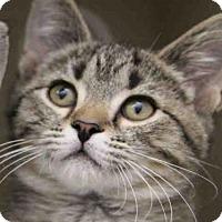Adopt A Pet :: SKITTLES - Pittsburgh, PA