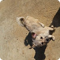 Adopt A Pet :: Sandy - Albany, GA