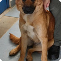 Adopt A Pet :: Josephina - Willingboro, NJ