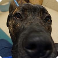 Adopt A Pet :: Walker - Wyandotte, MI