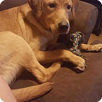 Adopt A Pet :: Rugger - Alva, OK