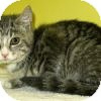Adopt A Pet :: Lester - Powell, OH