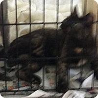 Adopt A Pet :: Lulu - Cocoa, FL
