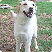 Adopt A Pet :: Eva - Spring, TX