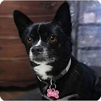 Adopt A Pet :: Lena Longworth - Kokomo, IN